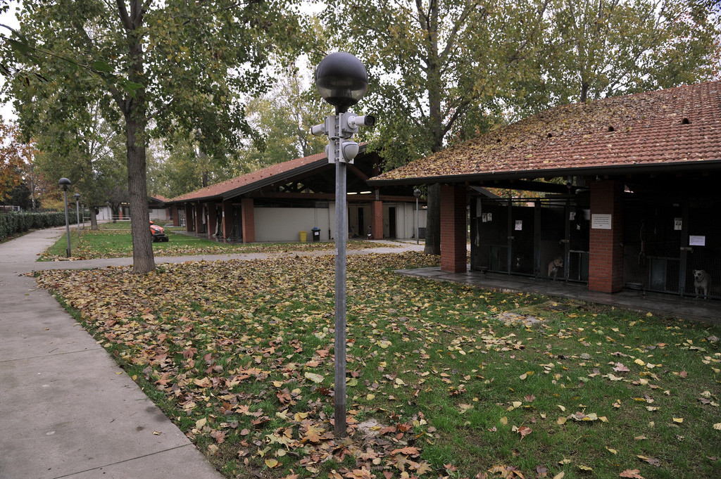 2015-11-16_Parco_Canile_9