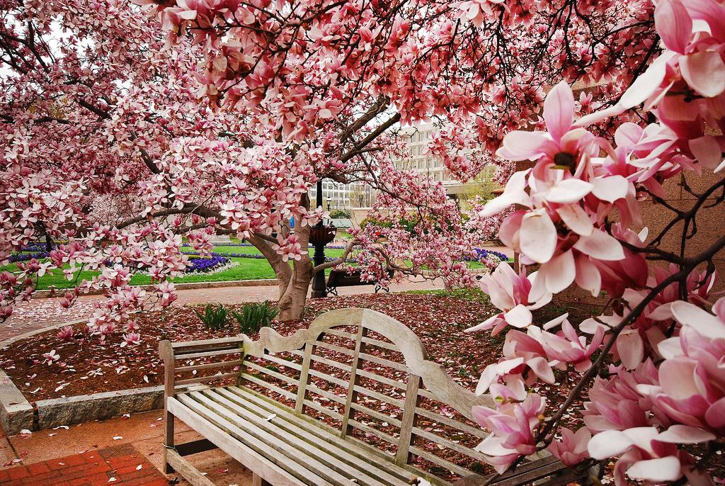 Milano bicocca ma il giardino delle magnolie for Magnolia pianta prezzi