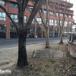 2016-01-20_Ripa_Porta_Ticinese_Alberi_2