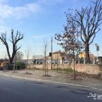2016-01-20_Ripa_Porta_Ticinese_Alberi_6