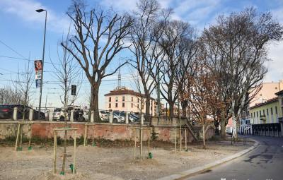 2016-01-20_Ripa_Porta_Ticinese_Alberi_8