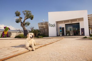 foof-museo-del-cane