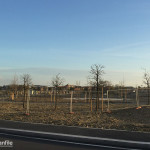 2016-03-29_Baggio_Parco_Fontanili_Cassinazza_2