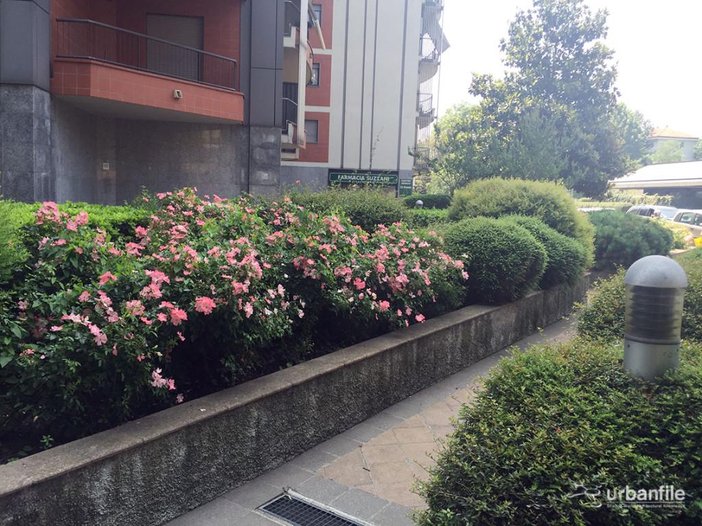 2016-06-19_Prato_Viale_Ca_Granda_22