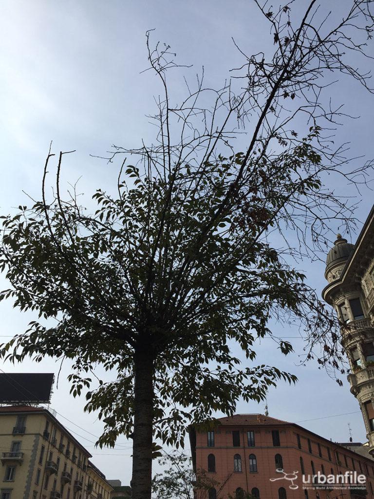 2016-10-08_alberi_piazza_argentina_1