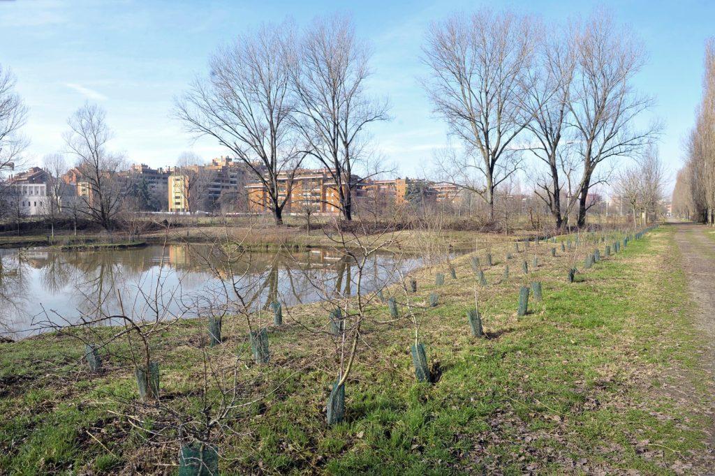 mlano selvenasco parco del ticinello alberi